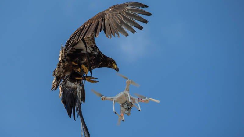 eagle_drone_grab